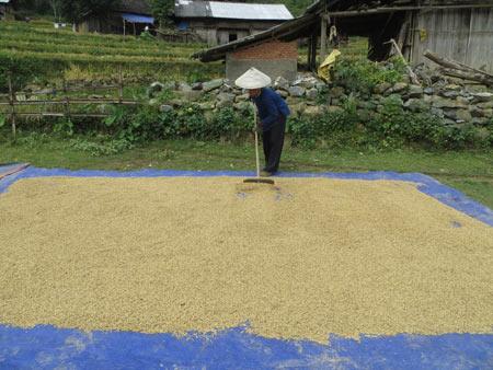 Quyến rũ sắc vàng mùa gặt ở Lùng Khấu Nhin - 12