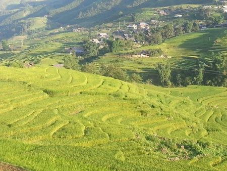 Quyến rũ sắc vàng mùa gặt ở Lùng Khấu Nhin - 2