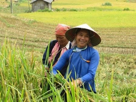 Quyến rũ sắc vàng mùa gặt ở Lùng Khấu Nhin - 9