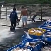 Clip bắt cá siêu dễ chỉ có ở Gia Lai