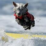 Phi thường - kỳ quặc - Những chú chó kiêu hãnh lướt sóng
