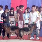 Bạn trẻ - Cuộc sống - Cún cưng đua sắc trong cuộc thi chó đẹp ở HN