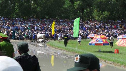 Kỳ thú đua bò Bảy Núi - 3