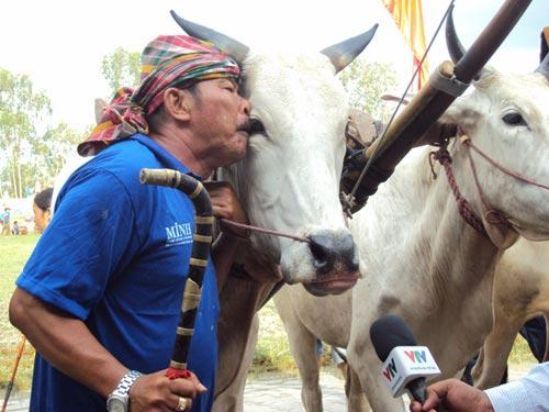 Kỳ thú đua bò Bảy Núi - 5