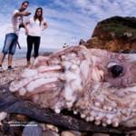 Tin tức trong ngày - Tây Ban Nha: Quái vật mực khổng lồ 9 mét dạt bờ