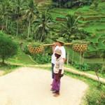 Du lịch - Cây xanh, đồng xanh ở Bali