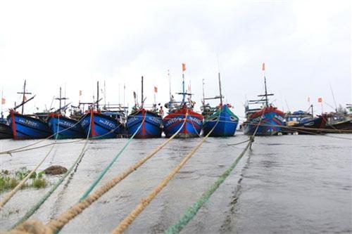 Đà Nẵng hối hả phòng chống bão Nari - 6