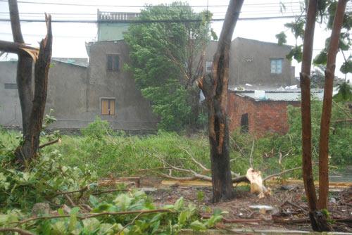 Chùm ảnh: Bão Nari càn quét miền Trung - 7