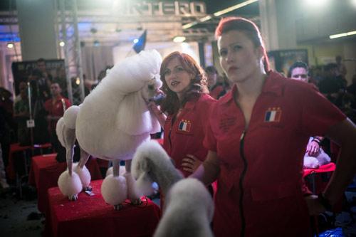 Cuộc thi sắc đẹp chải lông cho cún - 7