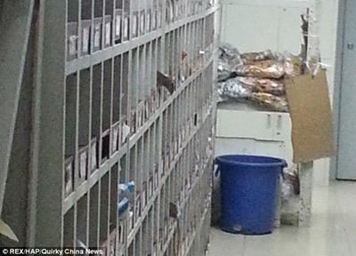 TQ: Chuột lúc nhúc trong phòng điều chế thuốc - 2