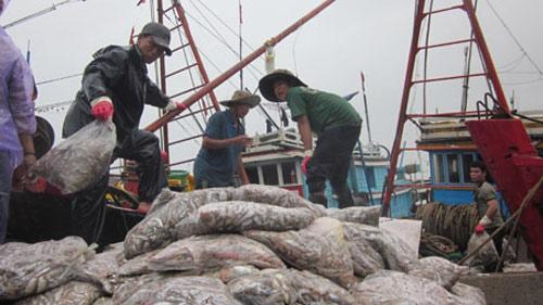 Ngư dân hối hả bán cá chạy bão - 1