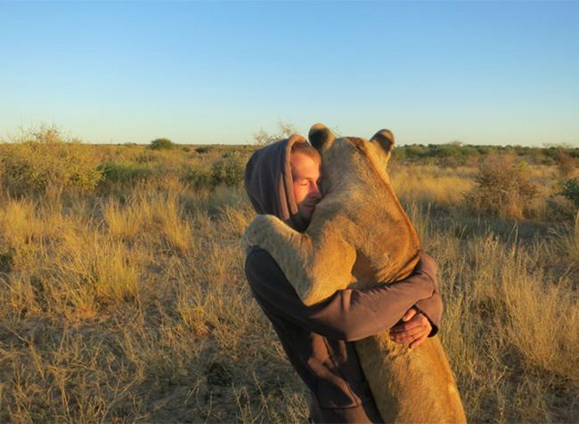 Cùng ôm ấp những chú sư tử như anh em