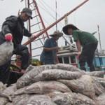 Thị trường - Tiêu dùng - Ngư dân hối hả bán cá chạy bão