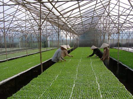 Đẩy nhanh phát triển nông nghiệp công nghệ cao - 1