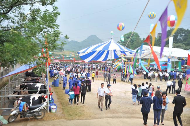 Cuộc thi Hoa hậu bò sữa 2013 là cuộc thi lần thứ 9 liên tiếp tại thị trấn Nông trường Mộc Châu, Sơn La.