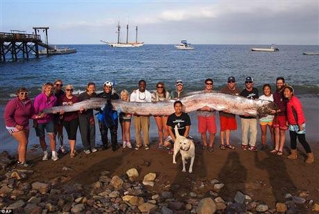 Bắt được cá dài hơn 5 mét ở Mỹ - 1