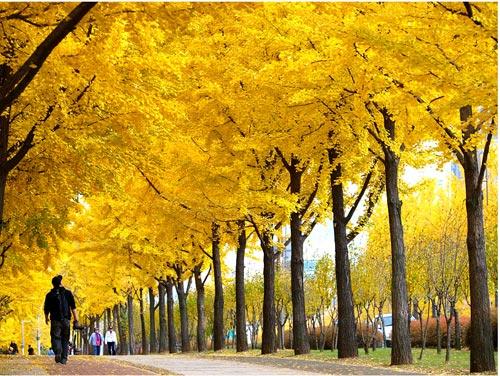 Mùa thu Hàn Quốc đẹp như tranh vẽ - 2