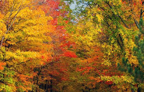 Mùa thu Hàn Quốc đẹp như tranh vẽ - 8
