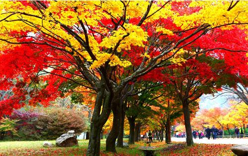 Mùa thu Hàn Quốc đẹp như tranh vẽ - 3