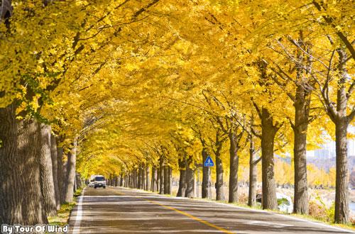 Mùa thu Hàn Quốc đẹp như tranh vẽ - 4
