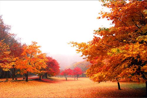 Mùa thu Hàn Quốc đẹp như tranh vẽ - 5