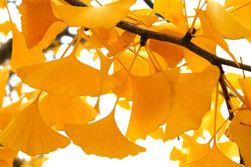 Mùa thu Hàn Quốc đẹp như tranh vẽ - 6