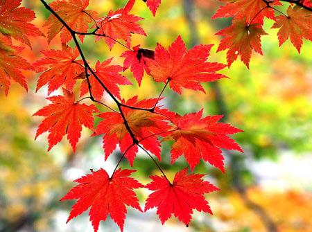 Mùa thu Hàn Quốc đẹp như tranh vẽ - 1
