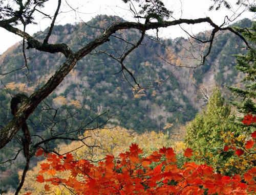 Mùa thu Hàn Quốc đẹp như tranh vẽ - 7