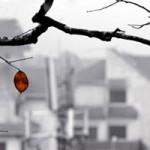 Ca nhạc - MTV - Lắng nghe và cảm nhận: Nỗi nhớ mùa đông