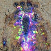 Phát hiện hóa thạch sinh vật cổ 520 triệu năm