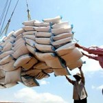 Thị trường - Tiêu dùng - Nông dân bị đứng ngoài tiến trình xuất khẩu gạo