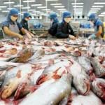 """Thị trường - Tiêu dùng - """"Đói"""" cá tra giữa mùa xuất khẩu"""