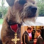Thể thao - Murray đeo Huân chương OBE cho... chó