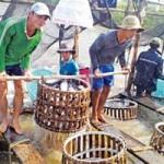 Thị trường - Tiêu dùng - 'Vỡ trận' ngành cá tra