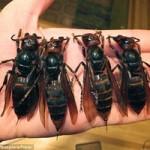 """Tin tức trong ngày - Trung Quốc """"tử hình"""" ong bắp cày đốt chết người"""