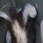Video Clip Cười - Video clip hài: Vị khách không mời