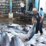 Thị trường - Tiêu dùng - Sẽ có chợ đấu giá cá ngừ