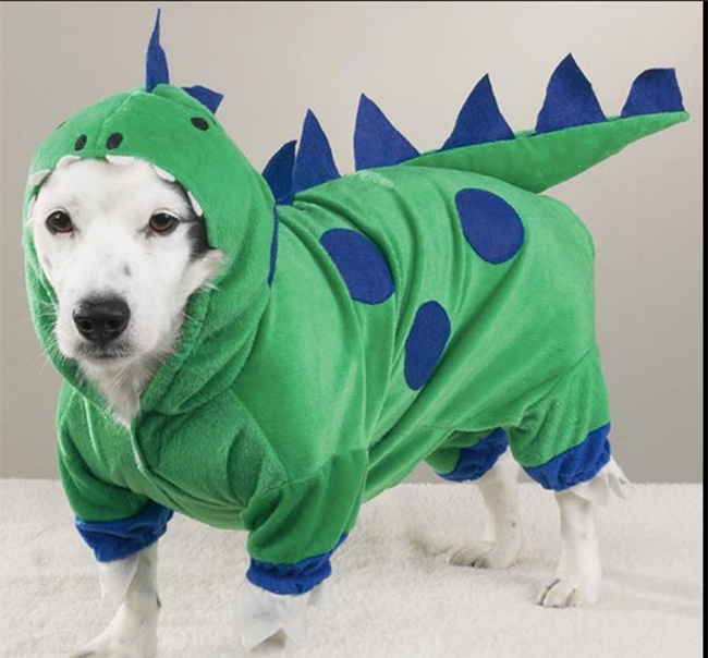 Chú cún được biến mình thành cá sấu