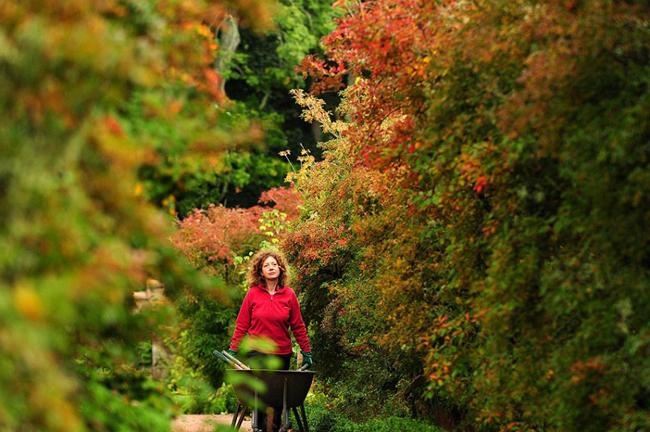 Thợ làm vườn Nicola Glendinning đi trong khu vườn mùa thu tại lâu đài Crathes gần Aberdeenshire.