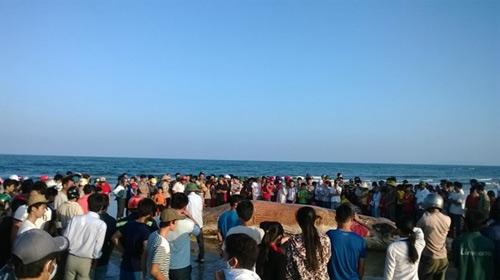 Thanh Hóa: Tổ chức lễ tang cho cá voi khổng lồ - 1