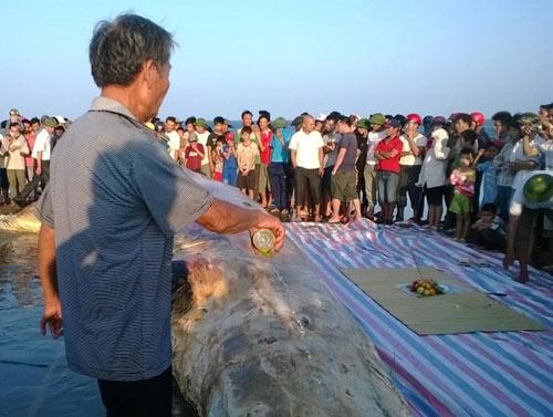 Thanh Hóa: Tổ chức lễ tang cho cá voi khổng lồ - 3