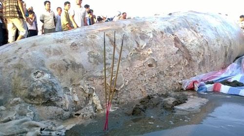 Thanh Hóa: Tổ chức lễ tang cho cá voi khổng lồ - 4