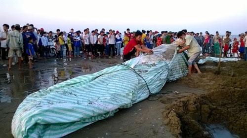 Thanh Hóa: Tổ chức lễ tang cho cá voi khổng lồ - 8