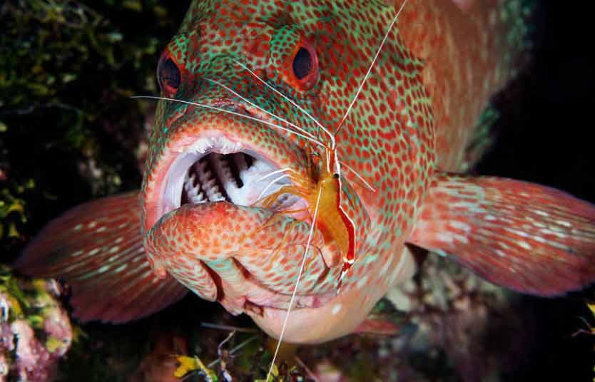 Ảnh đẹp: Cá voi sát thủ tấn công sư tử biển - 2