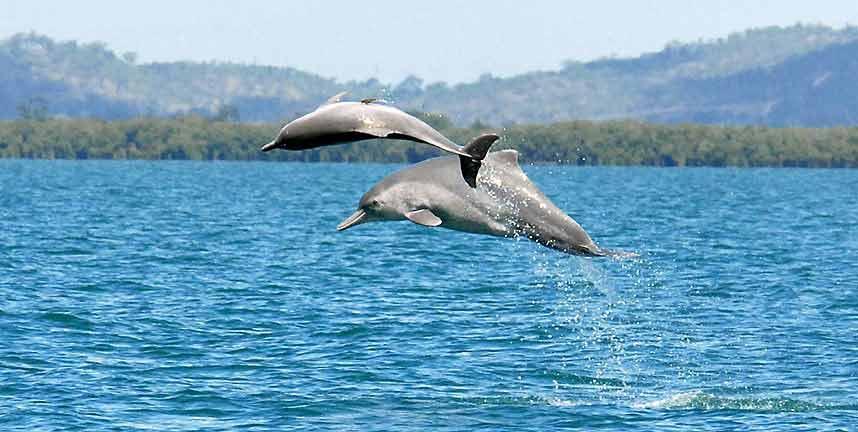 Ảnh đẹp: Cá voi sát thủ tấn công sư tử biển - 4
