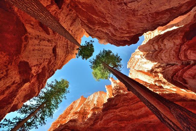 Công viên Quốc gia Bryce Canyon ở Utah, Mỹ nổi tiếng với những cây thông cao chót vót và các hẻm núi đá sâu hàng chục mét.