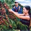 Việt Nam có thêm 8 kỷ lục châu Á