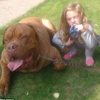 Anh: Bé gái 4 tuổi bị chó cưng cắn tới chết