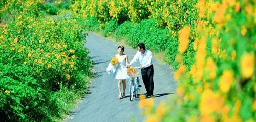Những cung đường đẹp để ngắm hoa dã quỳ ở Đà Lạt - 10