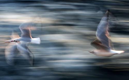 Ảnh đẹp: Hổ tức giận vì bị thả xuống nước - 8